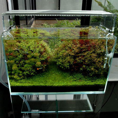 AQUASKY 602 (Twin light type)
